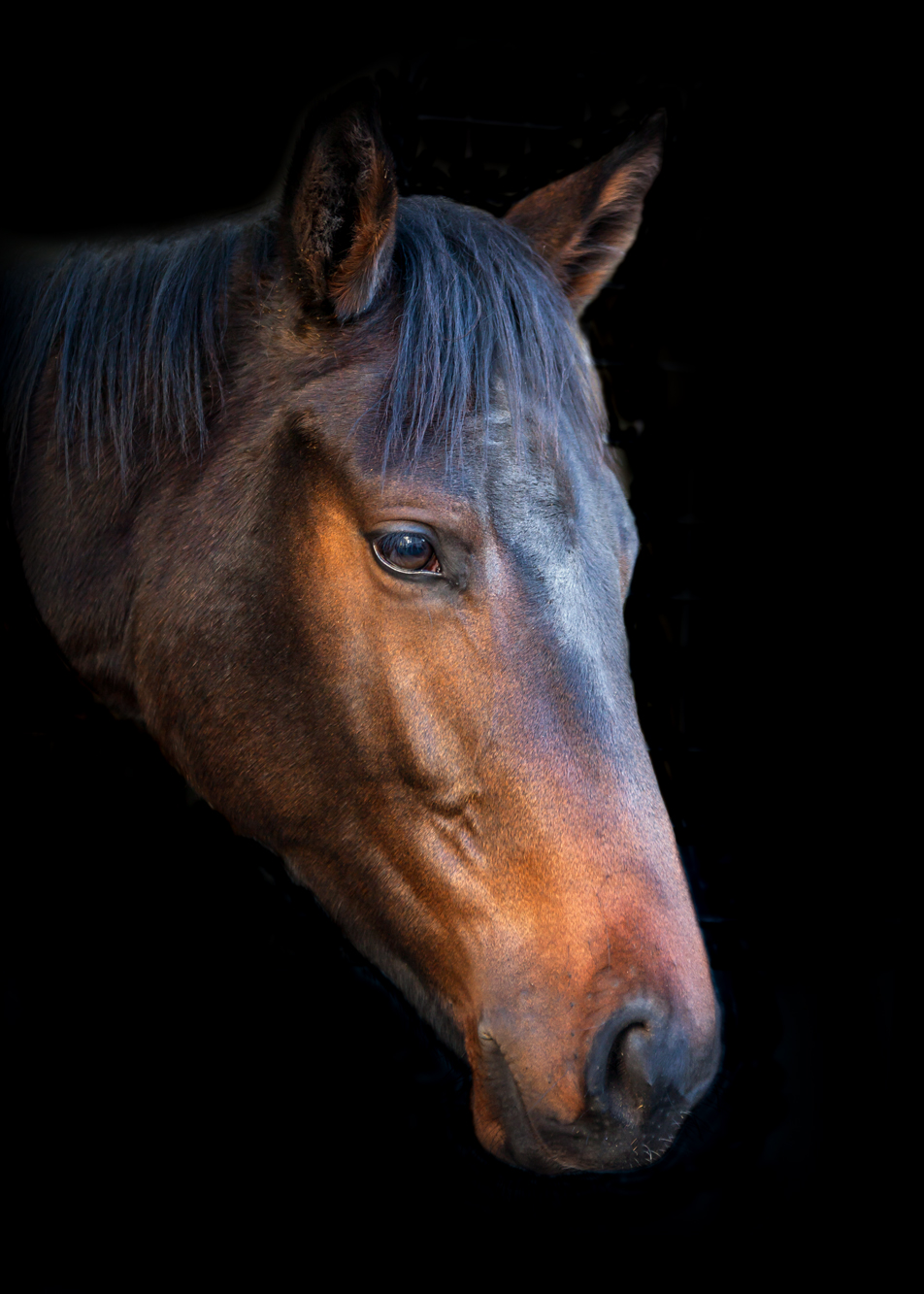 Equine Photography Damienkellyphotography